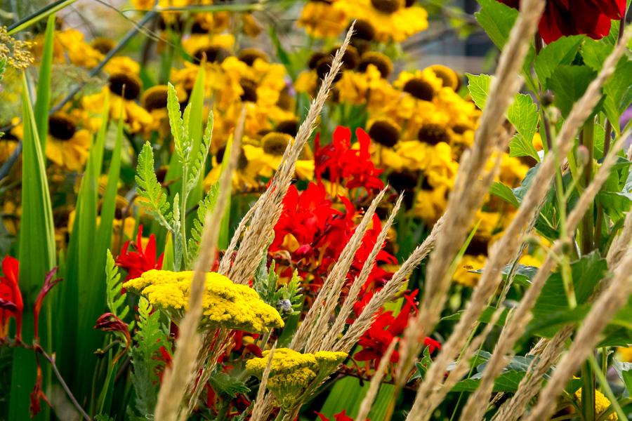 Sommerfarben gelb-rot